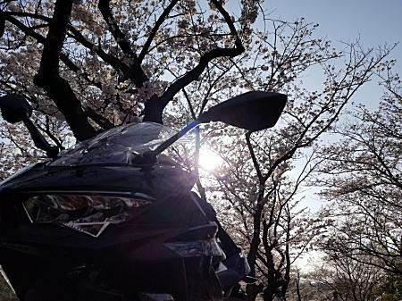 '18Ninja400+桜Ⅱ.jpg