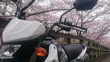 KSR110PRO桜1.jpg