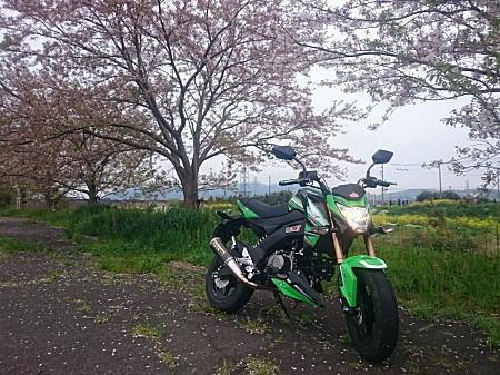 Z125PRO花水川.jpg