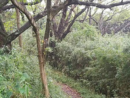 2018.9.2BOSS鎌倉ハイキングコース:トレラン1.jpg