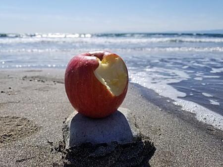 2019.3昼食のリンゴ.jpg